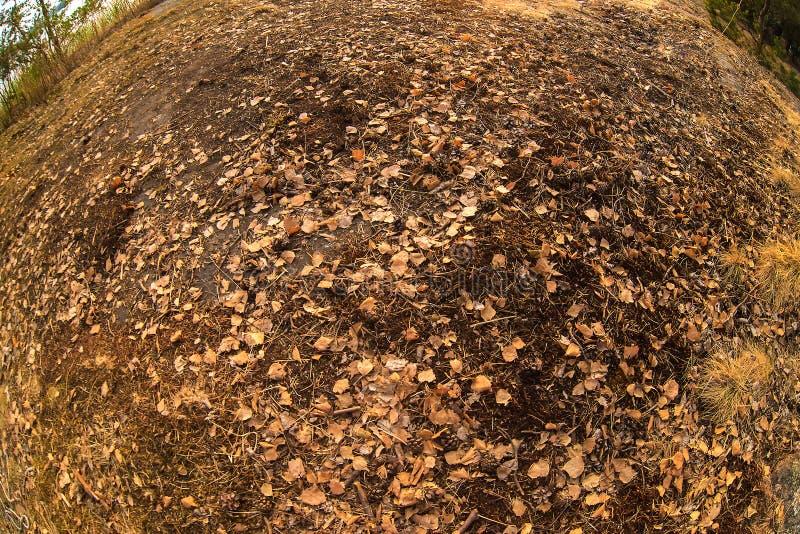 Το φυσικό υπόβαθρο πτώσης με τα ξηρά φύλλα φθινοπώρου μέσα το μάτι ψαριών Επίδραση της σφαίρας στοκ φωτογραφίες με δικαίωμα ελεύθερης χρήσης