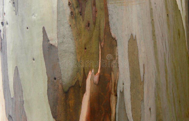 Το φυσικό υπόβαθρο σύστασης μίσχων δέντρων λόφων στοκ εικόνες με δικαίωμα ελεύθερης χρήσης