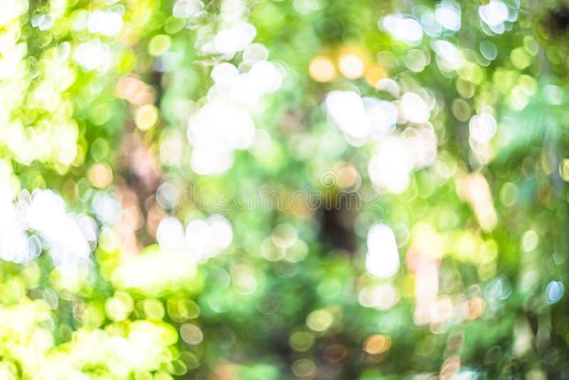 Το φυσικό υπόβαθρο bokeh, φρέσκο υγιές πράσινο βιο υπόβαθρο με την περίληψη θόλωσε το φύλλωμα και το φωτεινό θερινό φως του ήλιου στοκ εικόνα