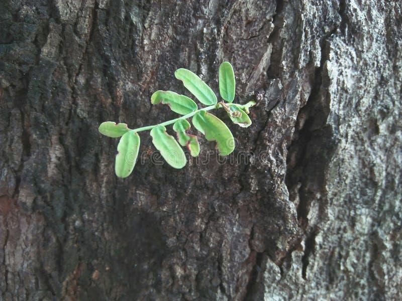 Το φυτό ζωής αυξάνεται το δέντρο αύξησης πράσινο στοκ φωτογραφία