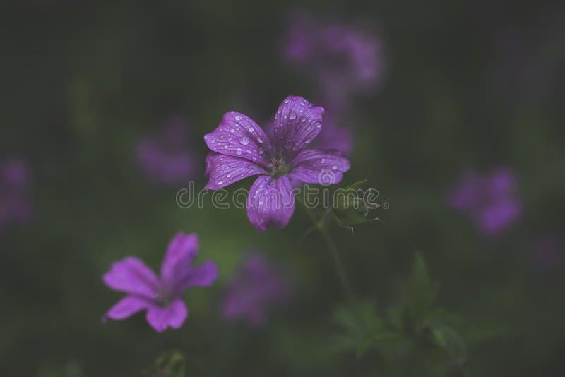 Το φωνάζοντας άγριο λουλούδι στοκ εικόνες με δικαίωμα ελεύθερης χρήσης