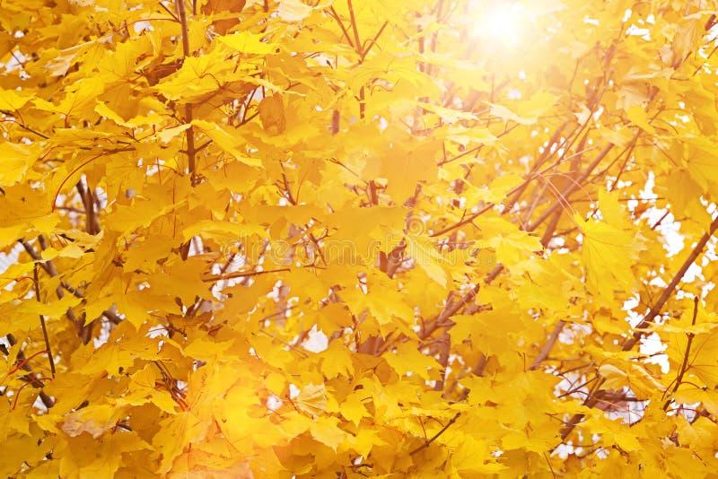 Το φωτεινό φθινόπωρο φεύγει στον ήλιο στοκ εικόνες