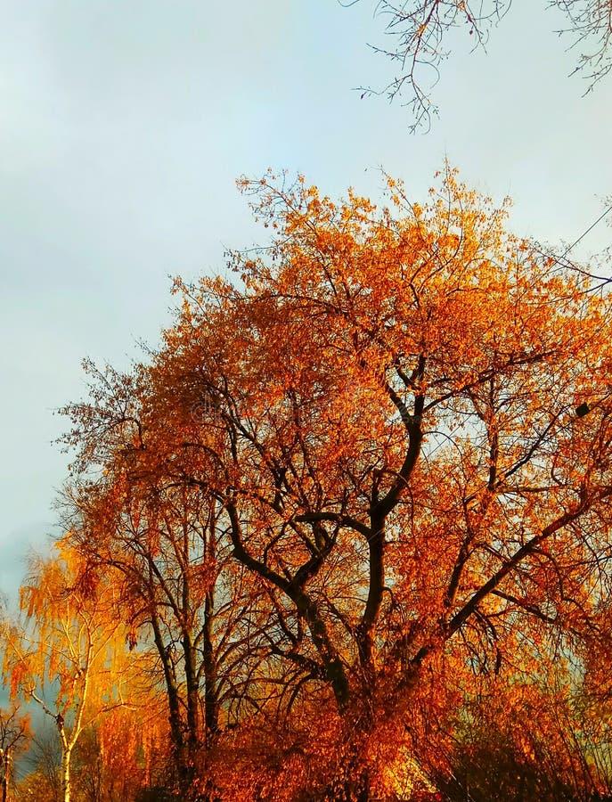 το φωτεινό φύλλωμα των δέντρων φθινοπώρου εξωραΐζει την πόλη στοκ φωτογραφίες