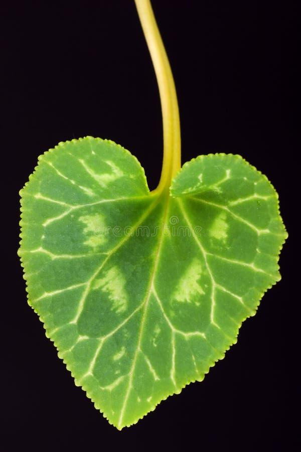 το φύλλο καρδιών στοκ φωτογραφία με δικαίωμα ελεύθερης χρήσης