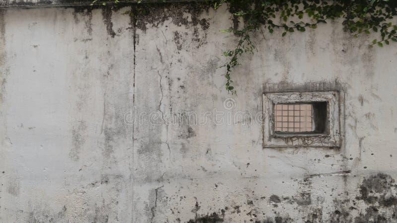 Φύλλο στο άσπρο υπόβαθρο τοίχων Φυσικός πράσινος τοίχος φύλλων, υπόβαθρο σύστασης στοκ φωτογραφία με δικαίωμα ελεύθερης χρήσης
