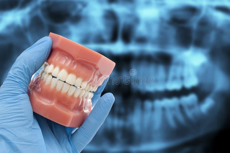 Το χέρι οδοντιάτρων παρουσιάζει οδοντικό χαμόγελο φορμών που απομονώνεται στο λευκό στοκ φωτογραφίες