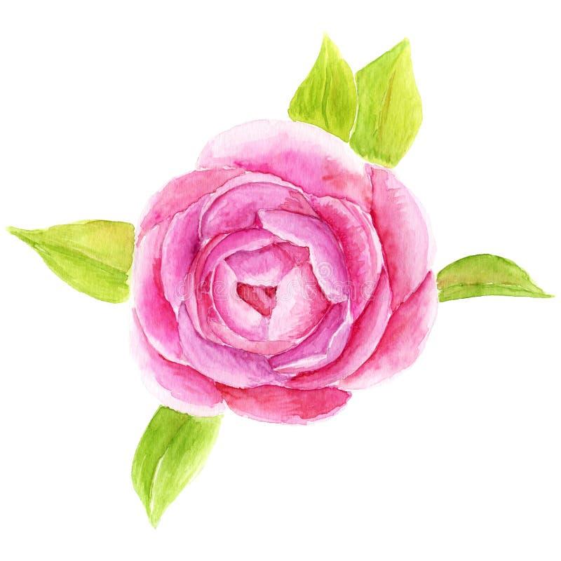 Το χέρι που σύρθηκε αυξήθηκε απεικόνιση watercolor λουλουδιών Διακοσμητική σύνθεση λουλουδιών ελεύθερη απεικόνιση δικαιώματος