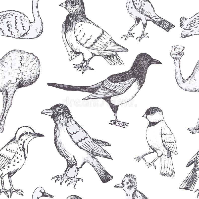 Το χέρι σύρει τα διανυσματικά πουλιά διανυσματική απεικόνιση
