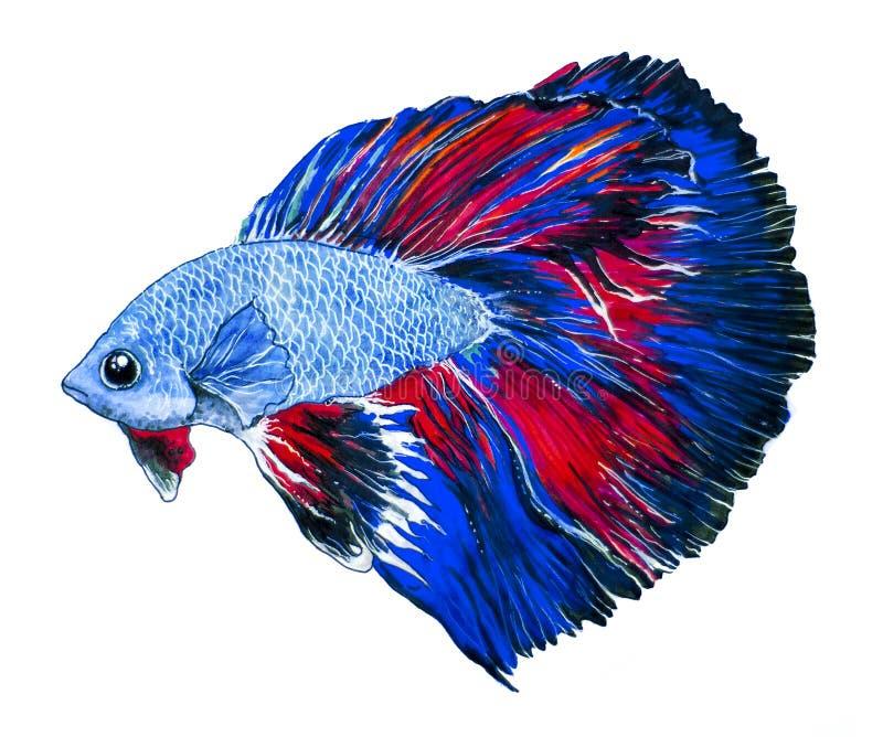 Το χέρι σύρει τα ψάρια απεικόνισης όμορφα, τέχνη, κινούμενα σχέδια, saltwater, εξωτικός, τροπικό, σκόπελος, κοράλλι, κατοικίδιο ζ διανυσματική απεικόνιση