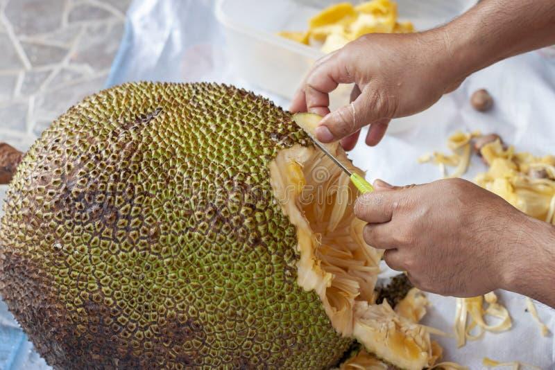 Το χέρι του ατόμου κρατά ένα μαχαίρι για να κόψει το jackfruit στοκ εικόνα