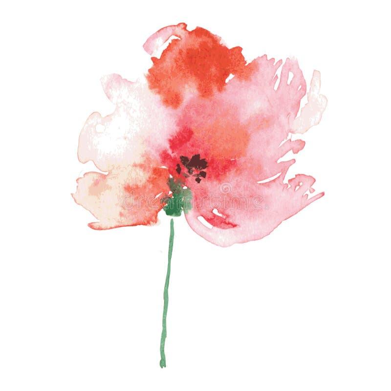 Το χέρι Watercolor χρωμάτισε την κόκκινη παπαρούνα Διάνυσμα floral διανυσματική απεικόνιση