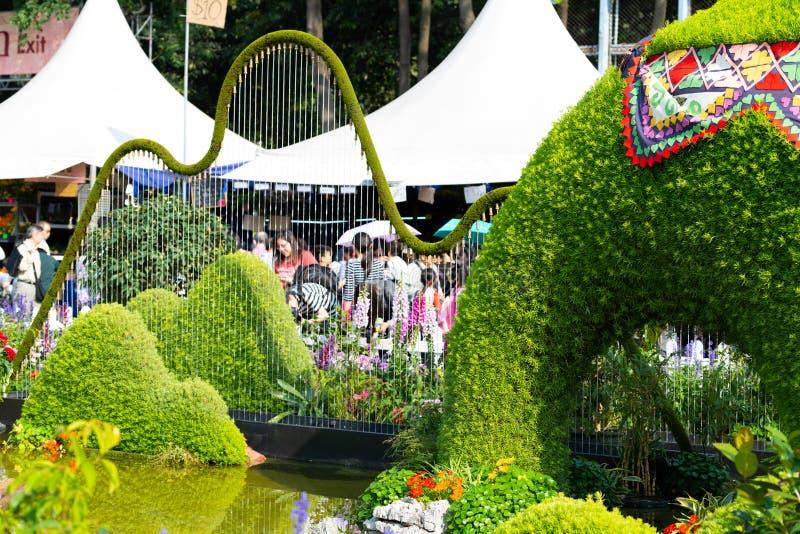 Το χαρακτηριστικό γνώρισμα νερού στο λουλούδι Χονγκ Κονγκ παρουσιάζει στοκ φωτογραφίες με δικαίωμα ελεύθερης χρήσης