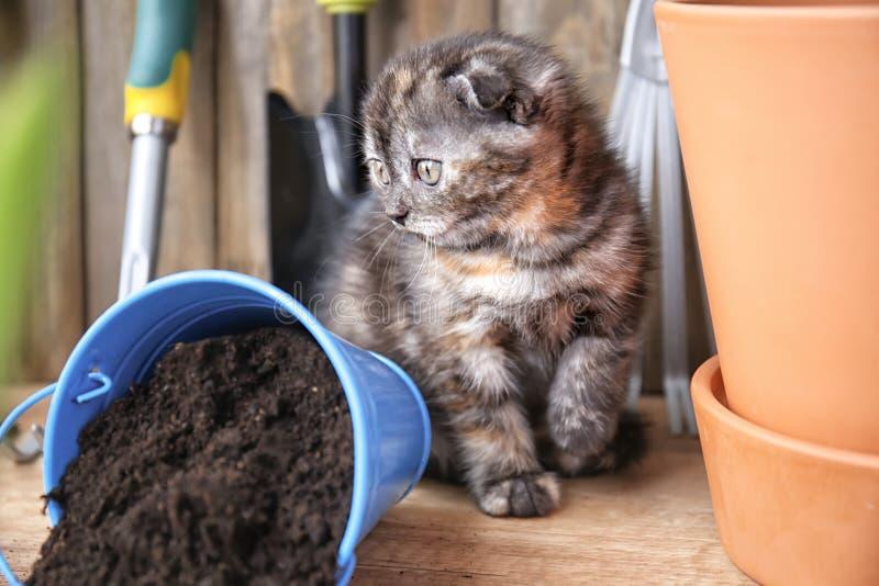 Το χαριτωμένο γατάκι ανέτρεψε πλησίον τον κάδο με το χώμα στο πάτωμα στο σπίτι στοκ εικόνες
