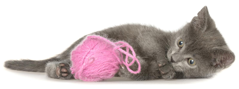 Το χαριτωμένο γκρίζο γατάκι shorthair βάζει και παιχνίδια με τη σφαίρα του νήματος που απομονώνονται στοκ εικόνες