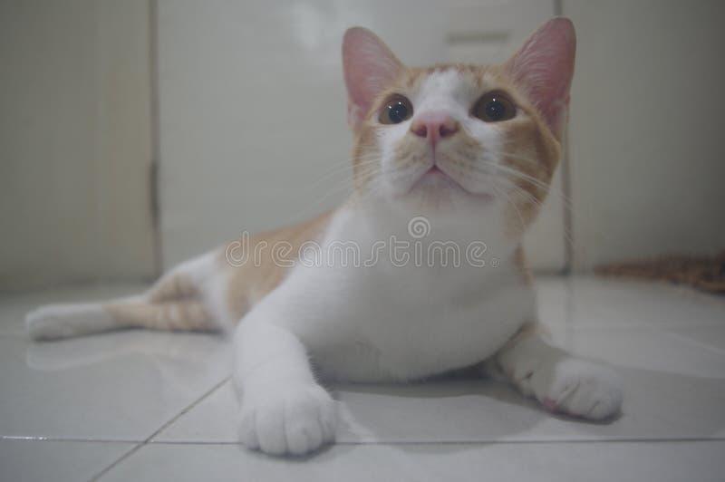 Το χαριτωμένο ζωικό μάτι βλέπει στοκ εικόνες