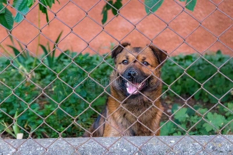 Το χαριτωμένο κουτάβι χαμόγελου στην αναμονή θέτει πίσω από το φράκτη Νέο σκυλί στο κατώφλι Ζωική έννοια φίλων στοκ εικόνες