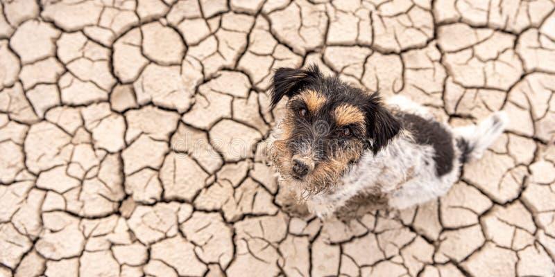 Το χαριτωμένο σκυλί κάθεται σε μια ξηρά αμμώδη έρημο και ανατρέχει - βρώμικα τεριέ του Jack Russell στοκ φωτογραφία με δικαίωμα ελεύθερης χρήσης