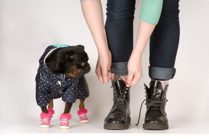 Το χαριτωμένο σκυλί εξετάζει τις μπότες στοκ εικόνες με δικαίωμα ελεύθερης χρήσης