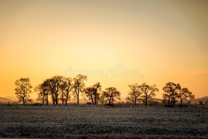Το χειμερινό τοπίο με τα δέντρα και το δασικό, ξηρό δέντρο χωρίς φύλλο με τον ουρανό ηλιοβασιλέματος και το έδαφος κάλυψαν το χιό στοκ εικόνα