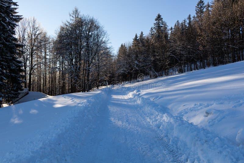 Το χειμερινό τοπίο, ο δρόμος πηγαίνει στην απόσταση, κατά μήκος κάτω από τα χιονισμένα δέντρα Μυθική, μυστική φωτογραφία στοκ εικόνες