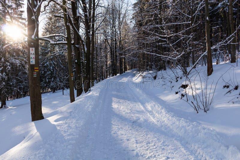 Το χειμερινό τοπίο, ο δρόμος πηγαίνει στην απόσταση, κατά μήκος κάτω από τα χιονισμένα δέντρα Μυθική, μυστική φωτογραφία στοκ εικόνα με δικαίωμα ελεύθερης χρήσης