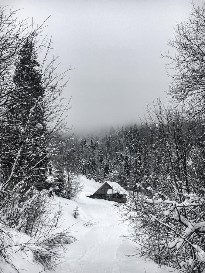 Το χειμερινό τοπίο στο κωνοφόρο δάσος εγκατέλειψε το παλαιό ξύλινο σπίτι, η καλύβα δασοφυλάκων ` s σε ένα χιονώδες λιβάδι Καρπάθι στοκ εικόνα με δικαίωμα ελεύθερης χρήσης