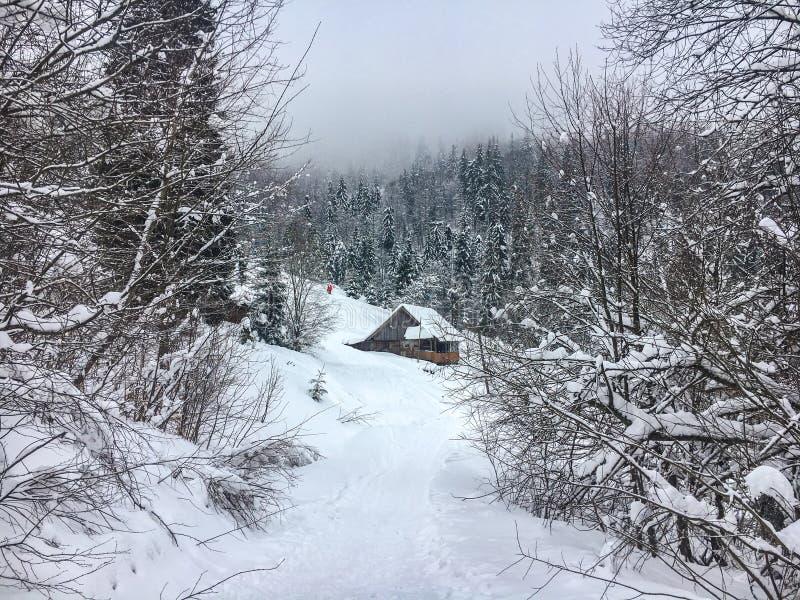 Το χειμερινό τοπίο στο κωνοφόρο δάσος εγκατέλειψε το παλαιό ξύλινο σπίτι, η καλύβα δασοφυλάκων ` s σε ένα χιονώδες λιβάδι Καρπάθι στοκ εικόνες