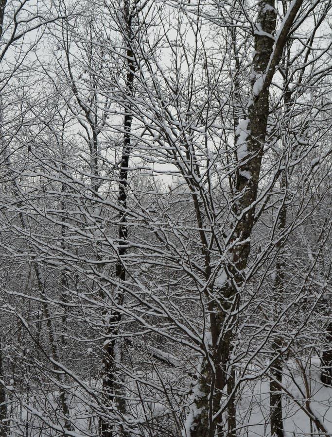 Το χιόνι που βρίσκεται στους κλάδους των ερυθρελατών χύνεται τέλεια, η του χωριού ανατολή όπου ένας πραγματικός χειμώνας πολύ χιό στοκ φωτογραφία με δικαίωμα ελεύθερης χρήσης