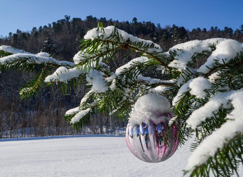 Το χιόνι που βρίσκεται στους κλάδους των ερυθρελατών χύνεται τέλεια, η του χωριού ανατολή όπου ένας πραγματικός χειμώνας πολύ χιό στοκ φωτογραφίες με δικαίωμα ελεύθερης χρήσης