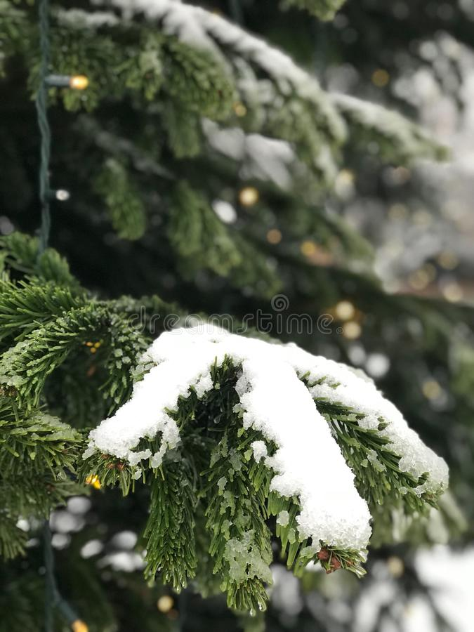 Το χιόνι στο Λονδίνο είναι ένα θαύμα στοκ φωτογραφίες
