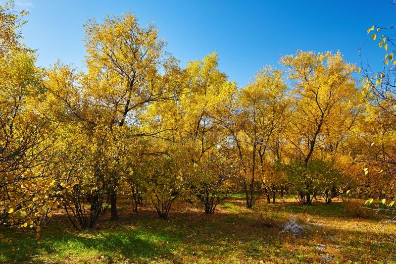 Download Το χρυσό δασικό τοπίο στοκ εικόνα. εικόνα από χρώμα, πράσινος - 62711045