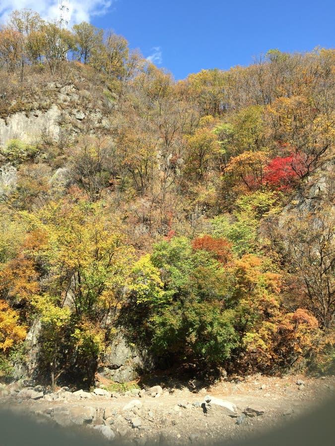Το χρώμα του φθινοπώρου στα ξύλα στοκ εικόνα με δικαίωμα ελεύθερης χρήσης