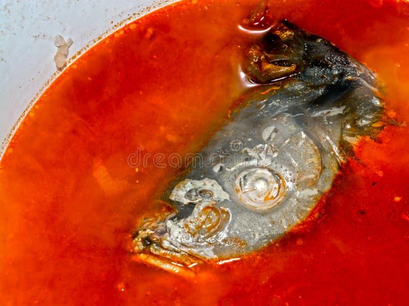 Το ψάρι κοιτάζει από τη σούπα στοκ εικόνα