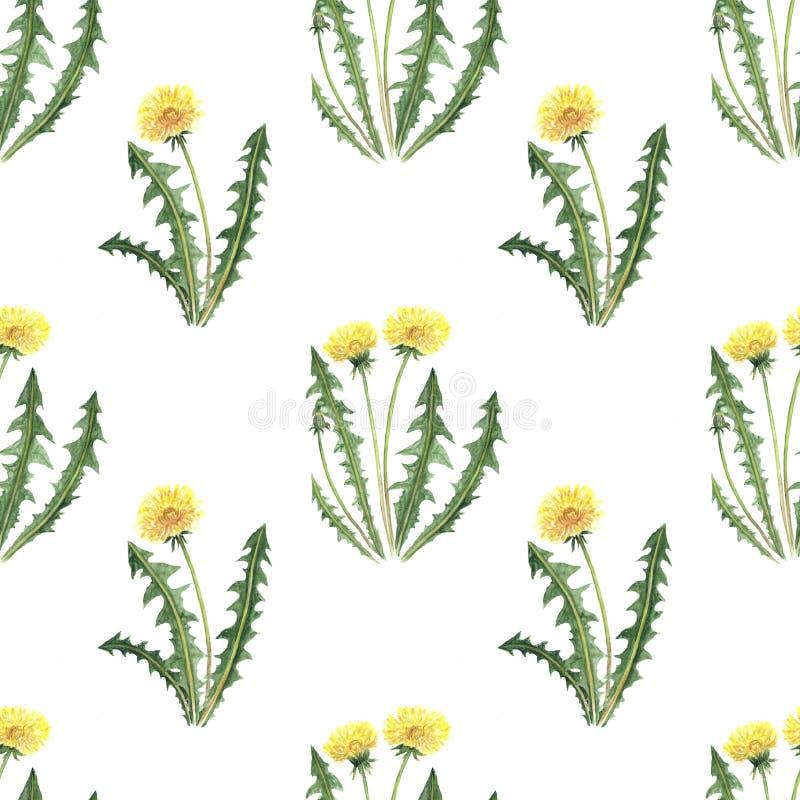 Το ψηφιακό lupine πικραλίδων μαργαριτών σχεδίων εγγράφου Watercolor cornflower ανθίζει το άνευ ραφής σύνολο απεικόνισης θερινού β διανυσματική απεικόνιση