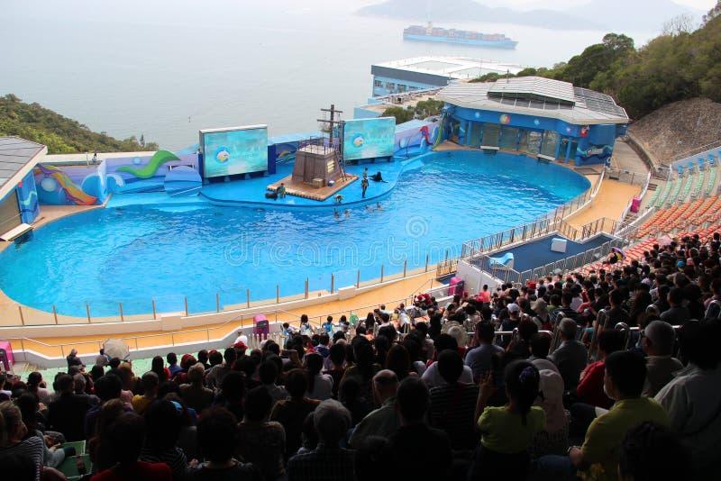 Το ωκεάνιο πάρκο, το δελφίνι Χονγκ Κονγκ και η σφραγίδα παρουσιάζουν στοκ φωτογραφίες