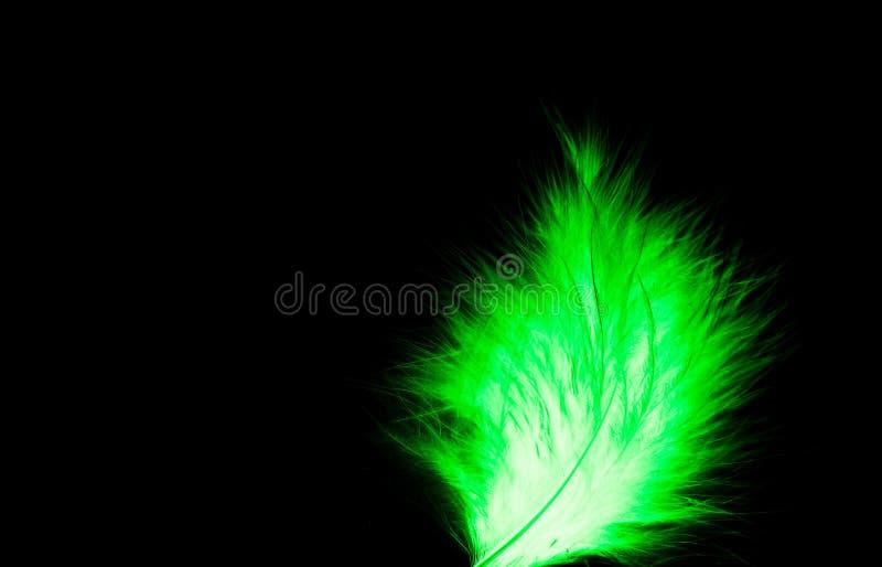 Το όμορφο αφηρημένο στενό επάνω πράσινο και άσπρο φτερό στο Μαύρο σκοταδιού απομόνωσε το υπόβαθρο και την ταπετσαρία στοκ εικόνες