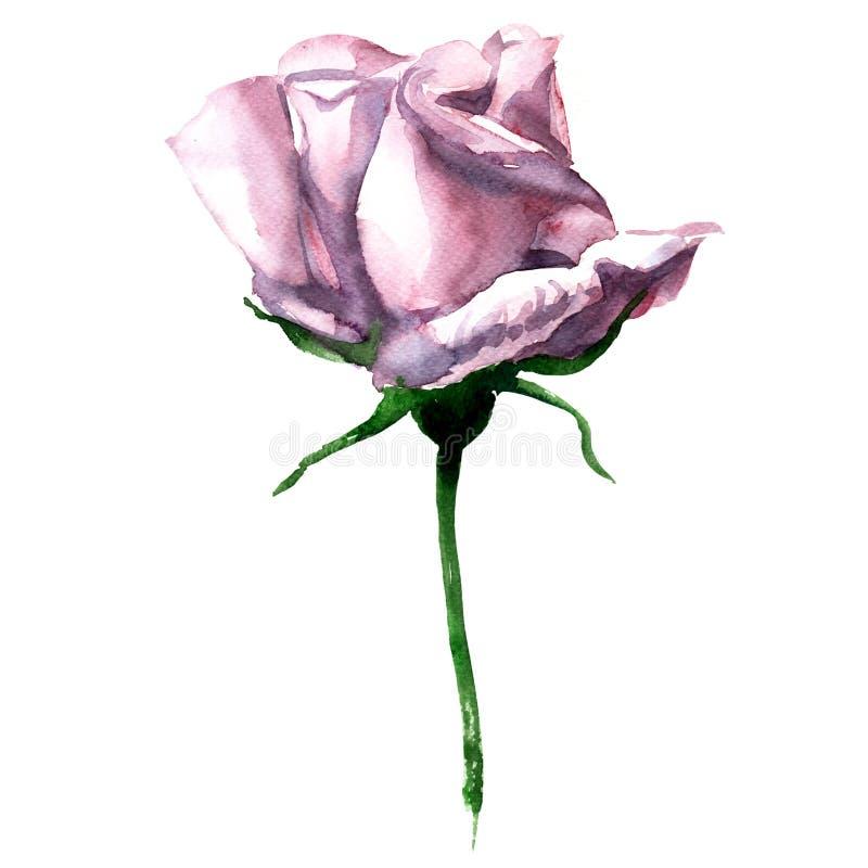 Το όμορφο ενιαίο ρόδινο watercolor αυξήθηκε απομονωμένος επάνω διανυσματική απεικόνιση