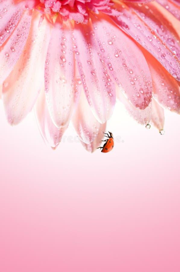 το όμορφο λουλούδι αυξή&t στοκ εικόνα