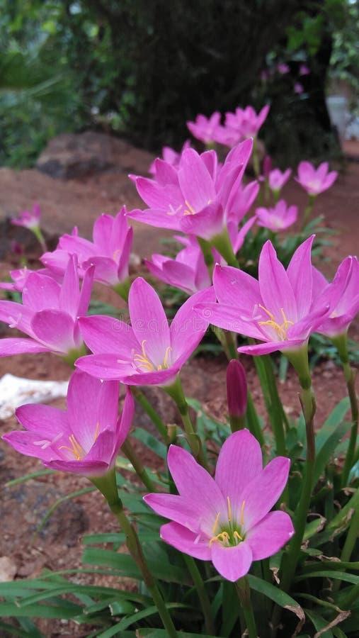 Το όμορφο λουλούδι στοκ φωτογραφία με δικαίωμα ελεύθερης χρήσης
