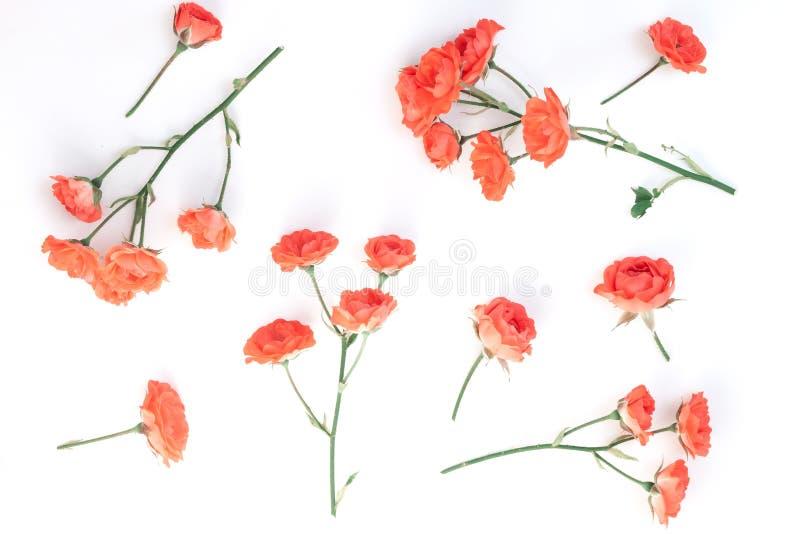 το όμορφο ροζ λουλουδ& στοκ φωτογραφία με δικαίωμα ελεύθερης χρήσης