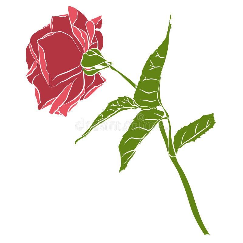 Το όμορφο συρμένο χέρι διάτρητο αυξήθηκε, απομονωμένος στο άσπρο υπόβαθρο Βοτανική σκιαγραφία του λουλουδιού ελεύθερη απεικόνιση δικαιώματος