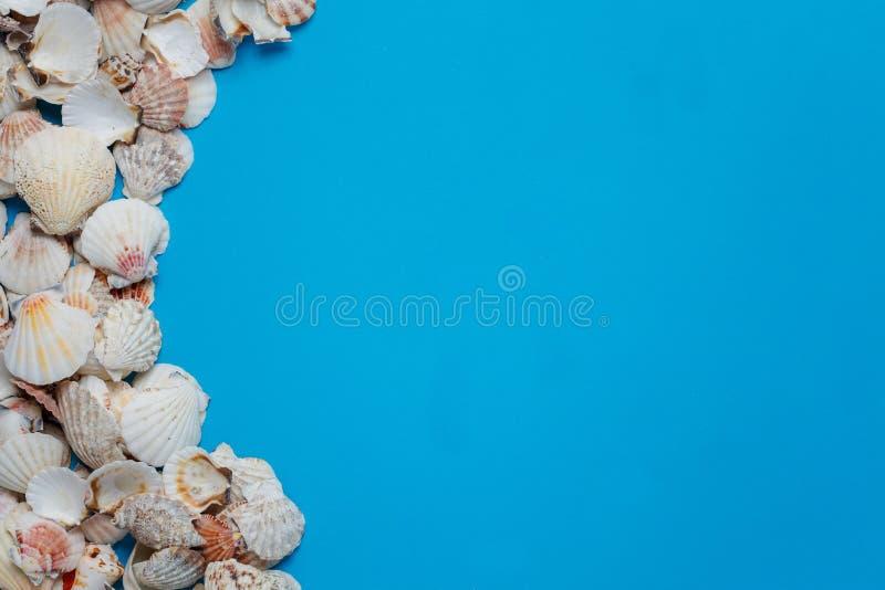 Το όμορφο τροπικό επίπεδο διακοσμήσεων θαλασσινών κοχυλιών βρέθηκε στοκ φωτογραφία με δικαίωμα ελεύθερης χρήσης