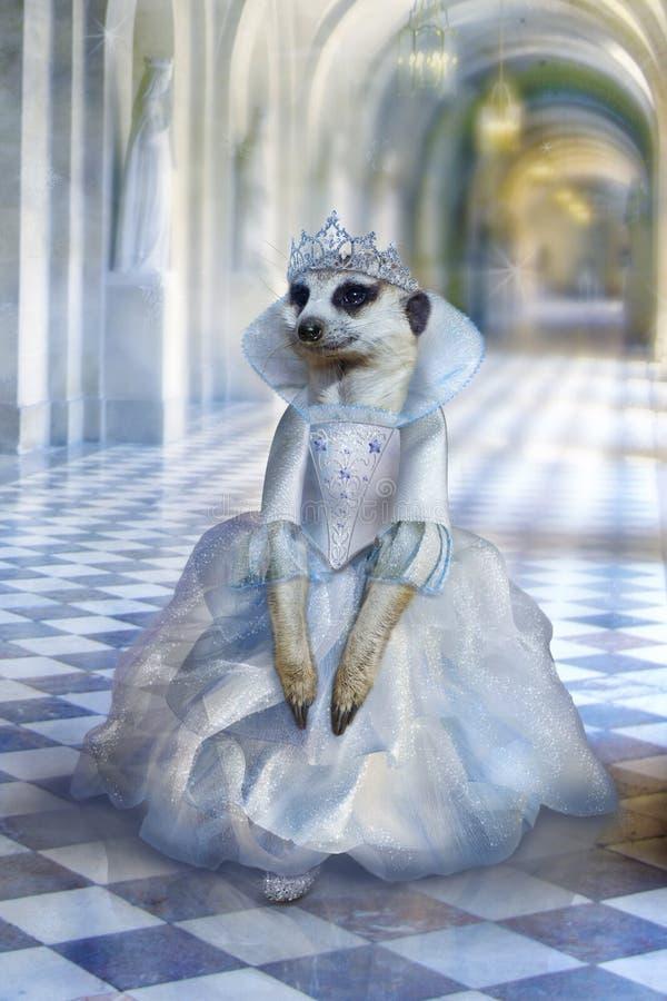 Το όμορφο χαριτωμένο ποντίκι πριγκηπισσών, meerkat στο μακρύ ανοικτό μπλε φόρεμα περπατά μέσω των διαδρόμων του μυθικού παλατιού, απεικόνιση αποθεμάτων