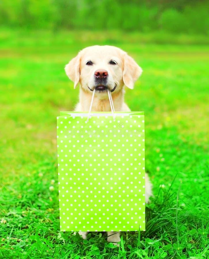 Το όμορφο χρυσό Retriever σκυλί κρατά μια πράσινη τσάντα αγορών στοκ εικόνα