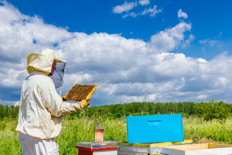 Το Apiarist, μελισσοκόμος κρατά την κηρήθρα με τις μέλισσες στοκ φωτογραφίες με δικαίωμα ελεύθερης χρήσης