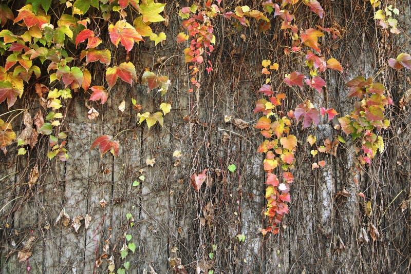 Το Ceeper φυτεύει τον τοίχο στοκ φωτογραφίες
