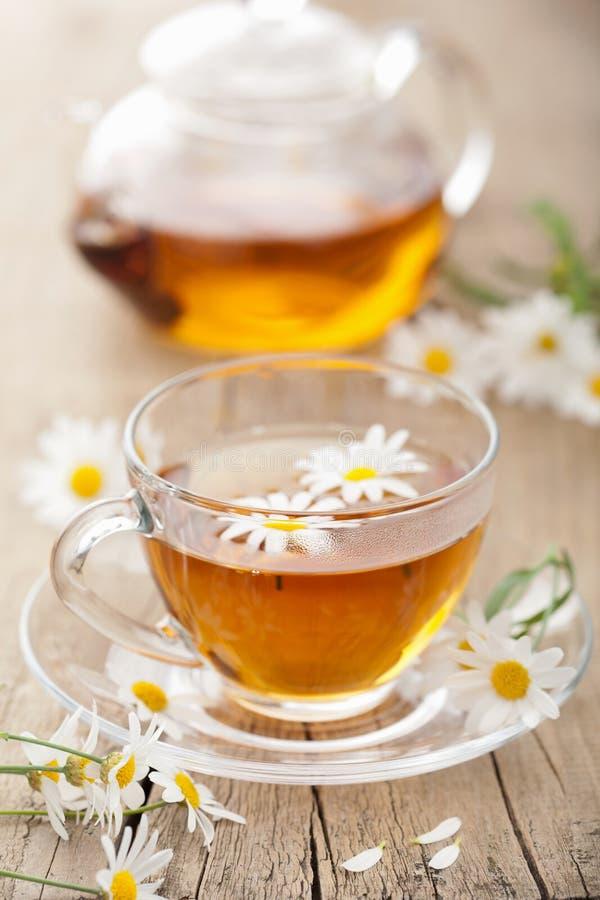 το chamomile φλυτζάνι ανθίζει το βοτανικό τσάι στοκ εικόνα
