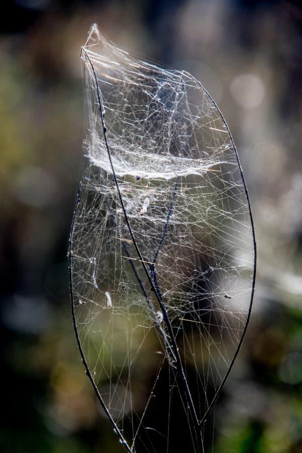 Το Cobweb μοιάζει με λάμπα στοκ φωτογραφίες