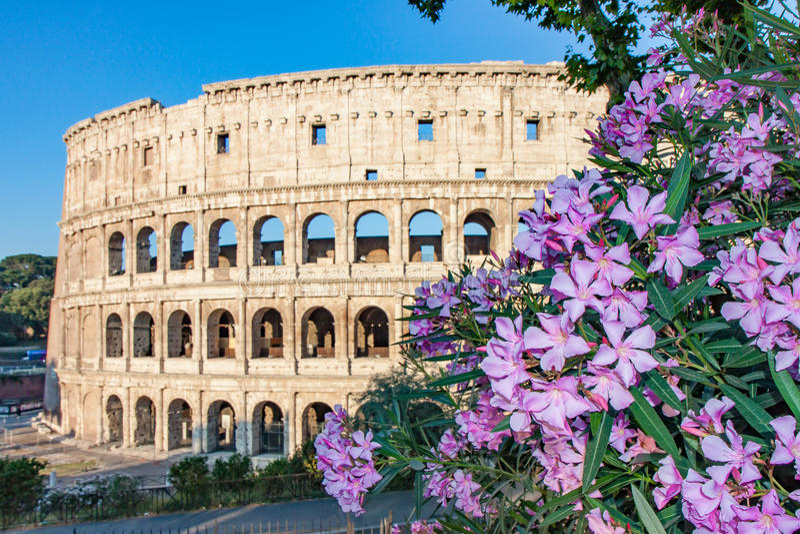 Το Colosseum στη Ρώμη στην ανατολή με τα πορφυρά λουλούδια στοκ φωτογραφίες