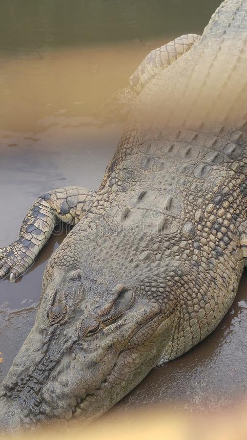 Το Crocodille χαλαρώνει επάνω στοκ φωτογραφία με δικαίωμα ελεύθερης χρήσης